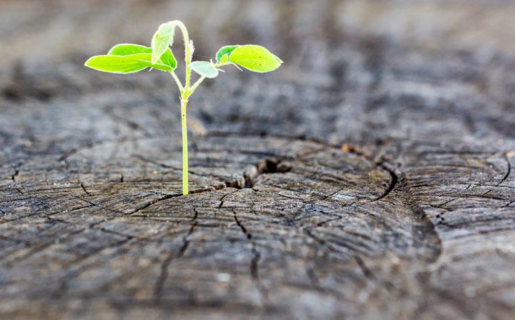 Startups com serviços diferenciados para o agronegócio estarão presentes no 3° Congresso Nacional das Mulheres do Agronegócio