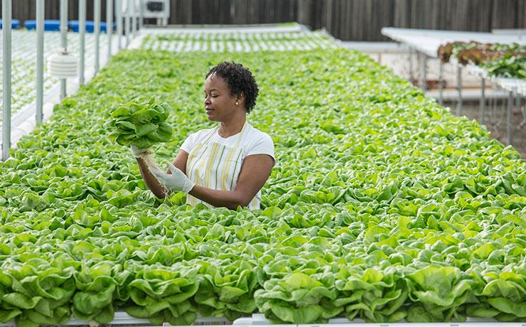 Confiança na atuação das mulheres no agro engaja empresas no CNMA