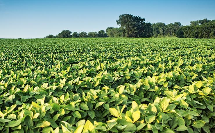 China aumenta importações de soja do Brasil em abril