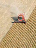 Brasil deve colher safra recorde de grãos mesmo com pandemia