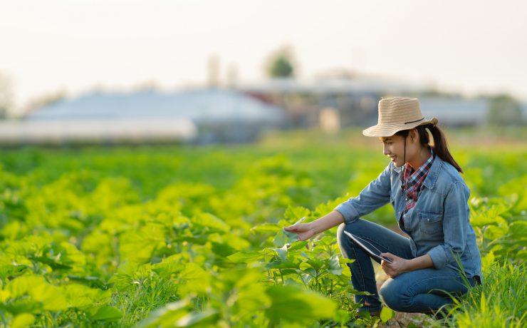 Em dez anos, presença feminina no mercado agropecuário de MS cresceu 29,3%